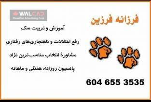 آموزش و پرورش سگ